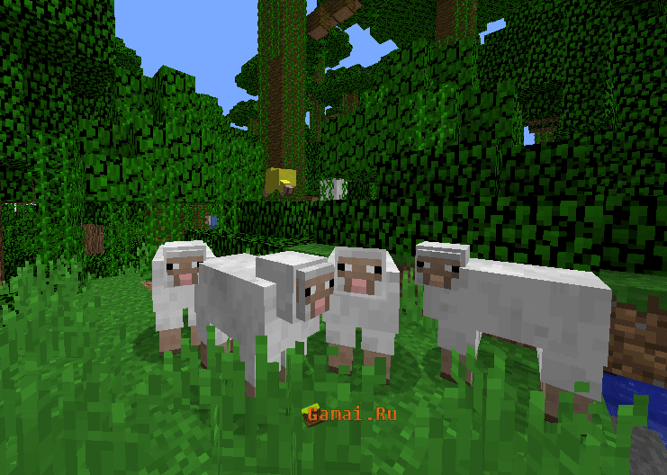 gamairu 101 sheep